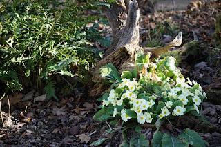 plants, flowers, ferns,