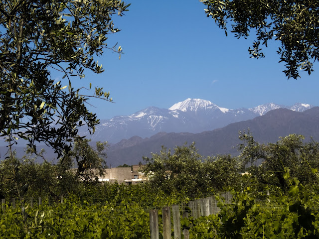 Alta Vista Vineyard near Mendoza Argentina (with the Andes behind)