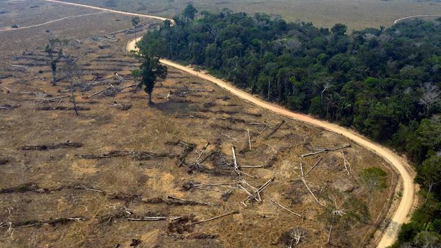 El Gobierno de Brasil destituye a la coordinadora del instituto que supervisa la deforestación en la Amazonía