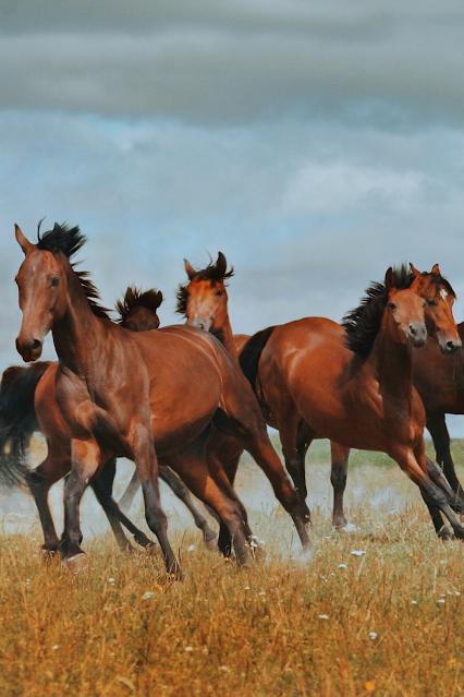 Wild Horse Herd in Field