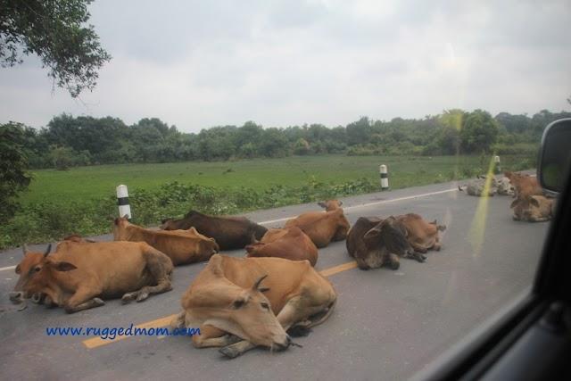 4X4 Roadtrip to Southern Thailand | Sungai Golok-Narathiwat 70km - Part 1