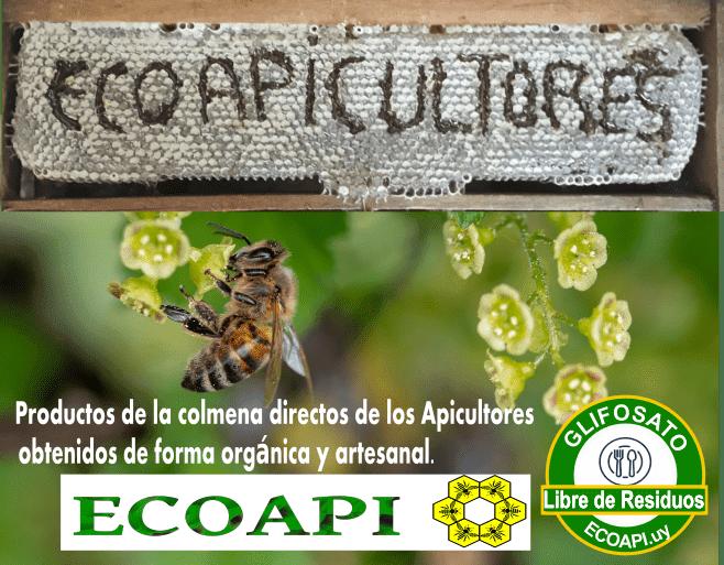 ecoapicultores miel libre de glifosato producto saludable