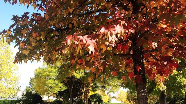 automne-nantes-france