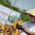 Ridwan Kamil, Resmikan Pertanian Infus Menggunakan Teknologi. Maka di Masa Depan Pertanian Tidak Lagi Konvensional.