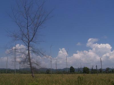 Tanjung Leman view