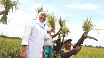 Begini Cara Khofifah Mengatasi Kekeringan, Untuk Wilayah Jawa Timur
