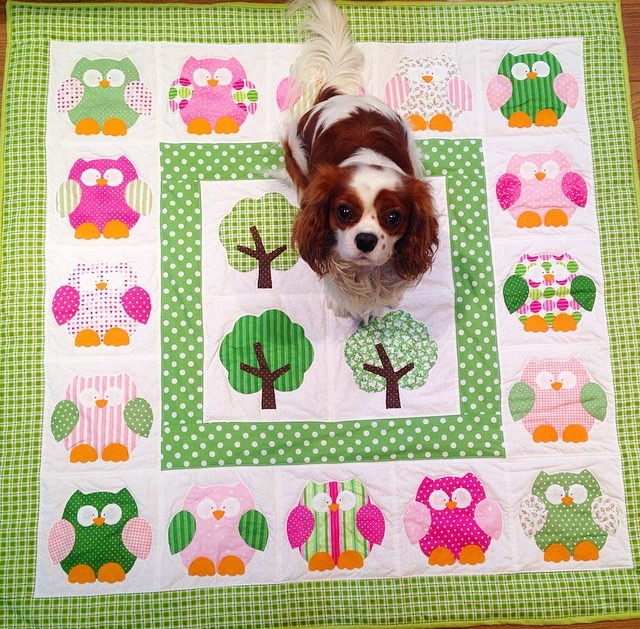 Blenheim Cavalier King Charles Spaniel on pink and green applique Hooterville owl quilt