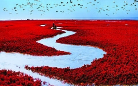 Sitios Naturales Sorprendentes, La Playa Roja en Panjin, China 2