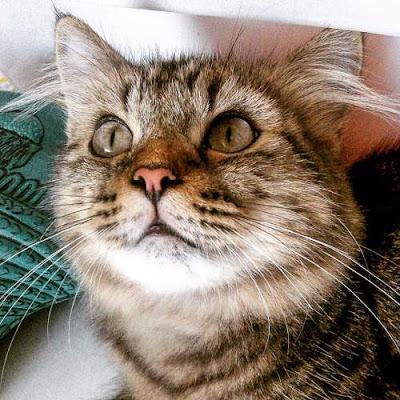 Kumpulan Arti Mimpi Tentang Kucing Terlengkap Makna Ramalan Baik dan Buruk