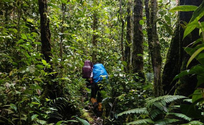 www.xvlor.com Bukit Baka Bukit Raya National Park is the heart of Borneo