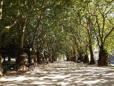 Alameda dos Plátanos no Jardim da Cordoaria