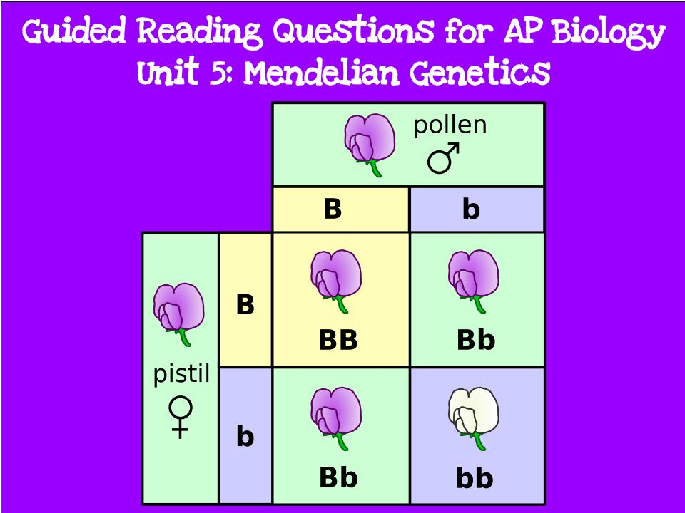 chapter 13 15 ap biology questions Biology, 7e (campbell) chapter 15: the chromosomal basis of inheritance chapter questions 1)  ap bio ch 15 7e.