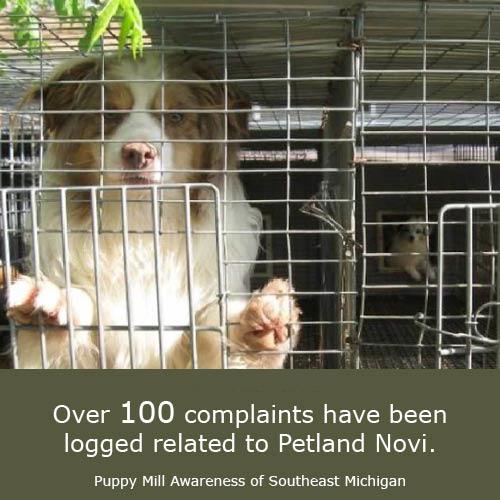 Puppy Mill Awareness Southeast Michigan: Sixteen