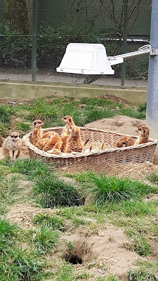 Familienausflug Kölner Zoo - Reiseblog für Familien