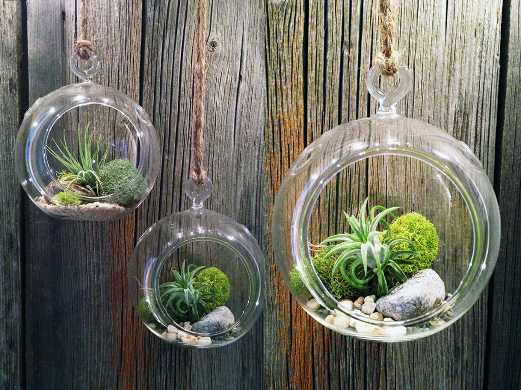 M s y m s manualidades como hacer un terrario for Air plant holder ideas