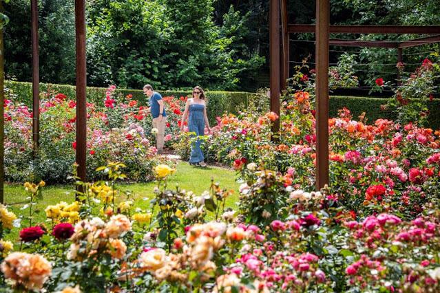 Coloma Castle Rose Garden