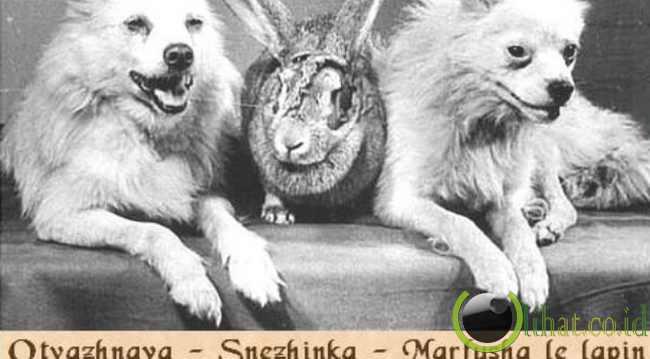 Otvazhnaya, Snezhinka dan Marfusha