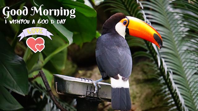 Vary Cute Bird Good Morning image
