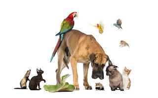 Hayvan Resimleri En Güzel Resimler, Fotoğraflar, Resimleri En Güzel Hayvan Resimleri Komik Hayvan Resimleri ve Capsleri En Komik Hayvan Fotoğrafları Yılın En Komik Hayvan Fotoğrafları Vahşi Hayvanlar Fotoğraflar, Resimler Ve Görseller HD Kalitesinde Hayvan Resimleri En Güzel Hayvan Capsleri En Komik Hayvan Caps'leri resimleri