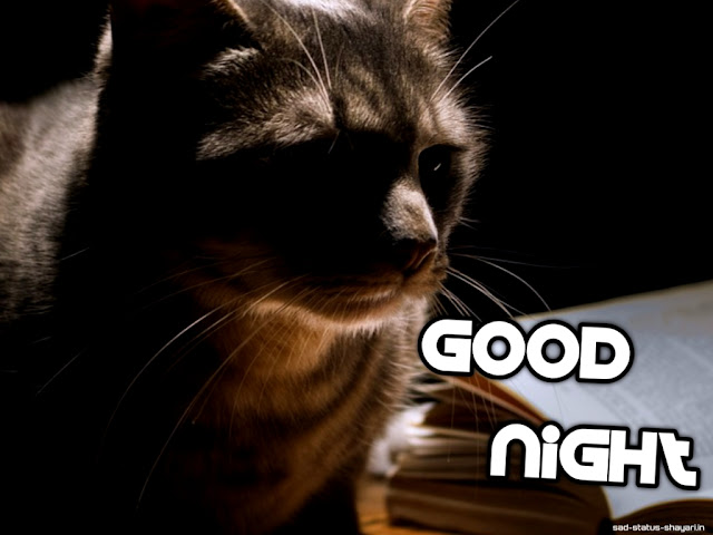 Good night images of cat