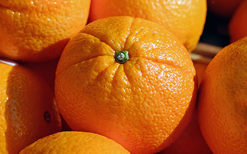 Grow and harvest orange trees indoors