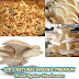 100% NATURAL ORGANIC PREMIUM Dried Oyster Mushroom vegetarian vegan food Free ship 100g