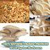 100% NATURAL ORGANIC PREMIUM Dried Oyster Mushroom vegetarian vegan food Free ship 100g