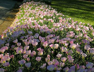 дикие -цветы