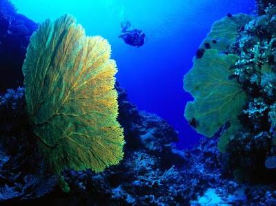 Foto de una buceador dentro del mar