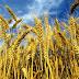 A Cerignola l'undicesima edizione della Festa dell'Agricoltura, organizzato da UIL-UILA-COPAGRI FOGGIA