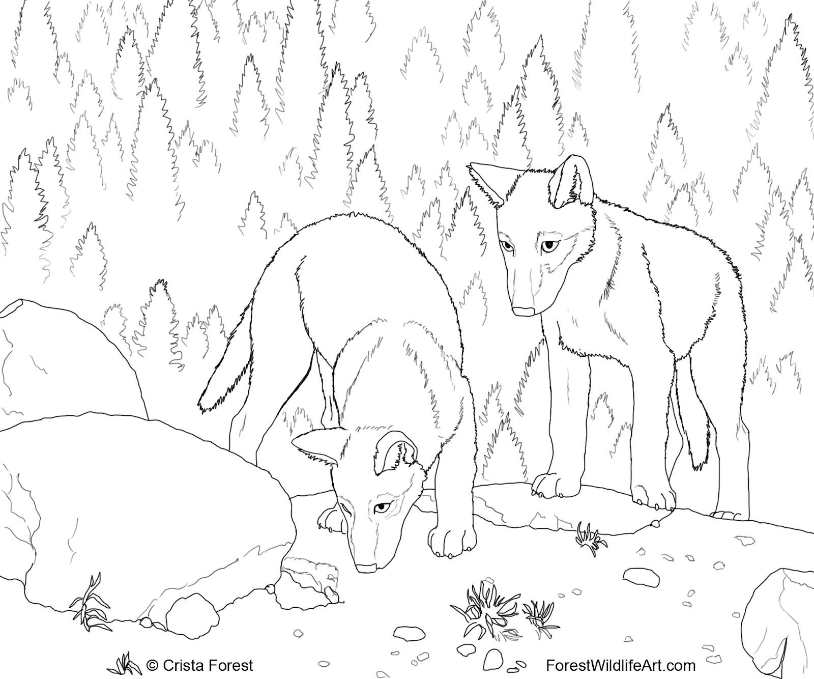 forest wildlife art wolf pups