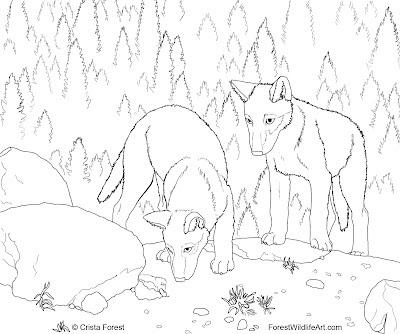 Animal Jam Drawings Arctic Wolves