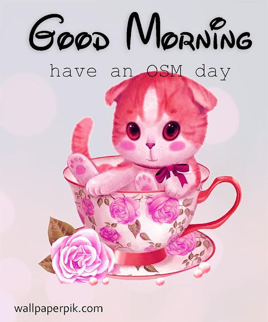 cute Good Morning Sweet And Cute Baby cat  Hd Wallpaper