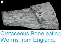 https://sciencythoughts.blogspot.com/2015/04/cretaceous-bone-eating-worms-from.html
