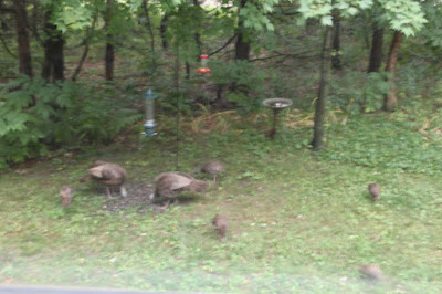 "the ""flock"" at the from feeder"