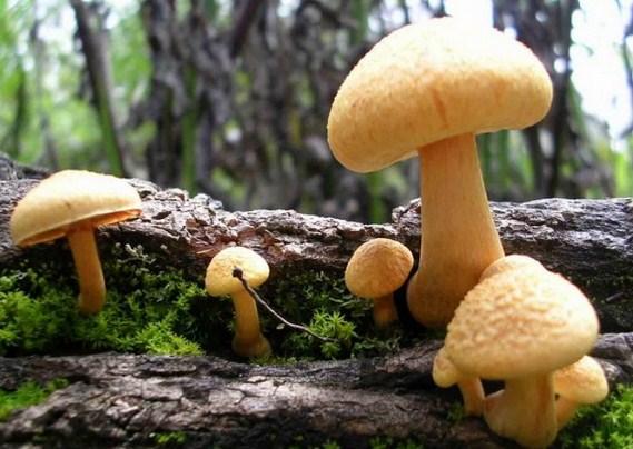 Ragam Jenis, Ciri dan Klasifikasi Jamur (Fungi)