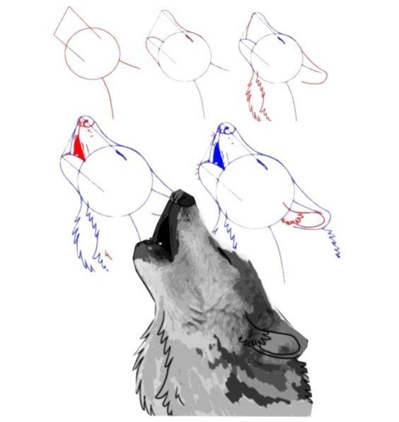 Como Hacer un Boceto Animales Lobo varias posturas