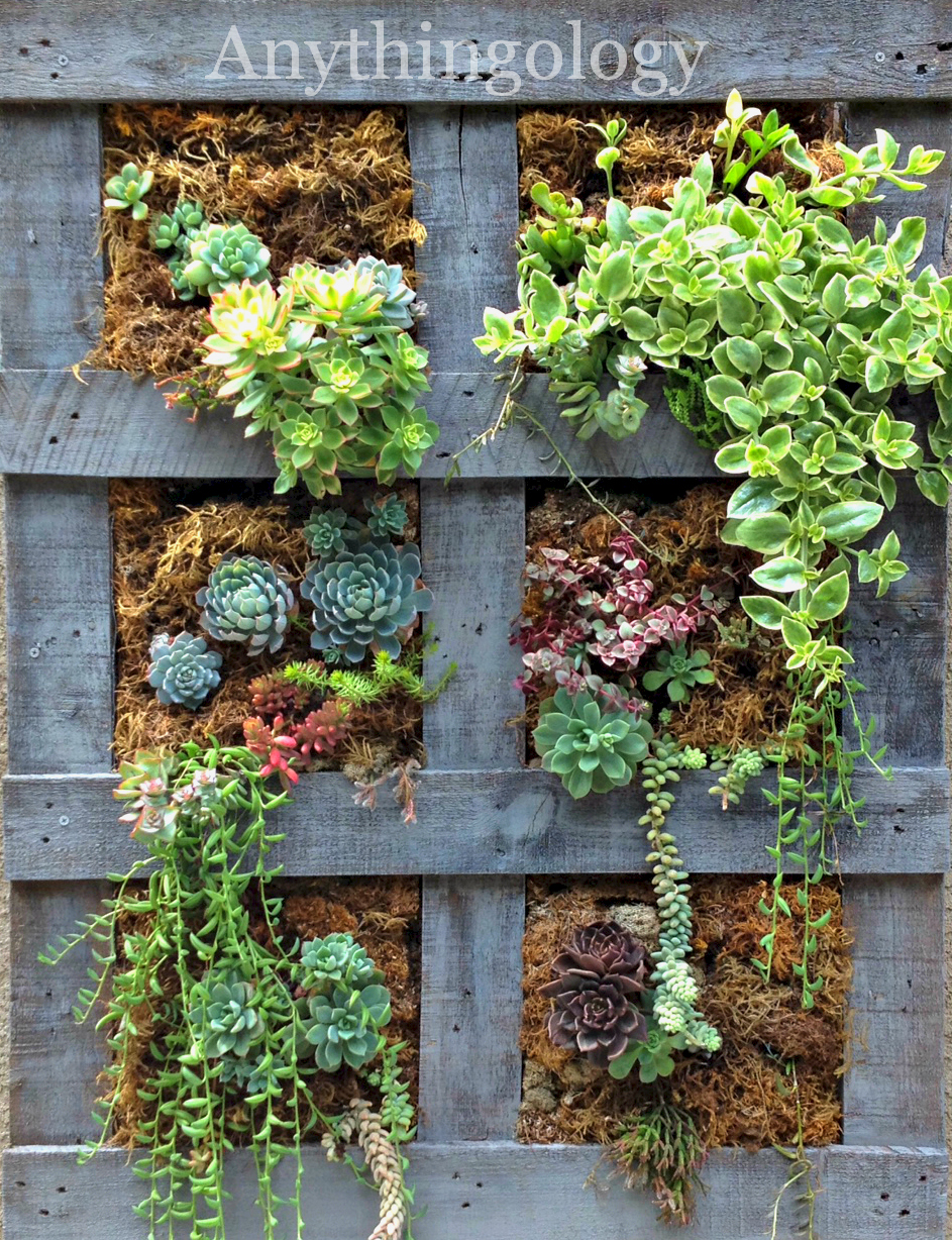 Anythingology vertical pallet garden update for Wall plants outdoor