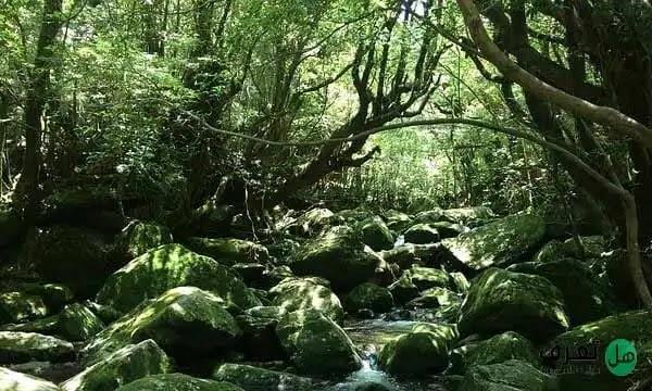 اجمل غابات العالم