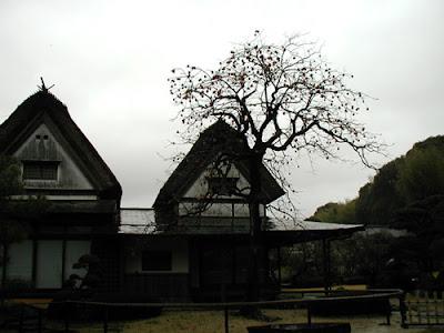 柿右衛門の柿の木