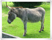 Donkey Animal Pictures
