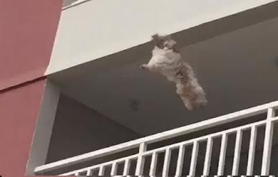 queda-cadela