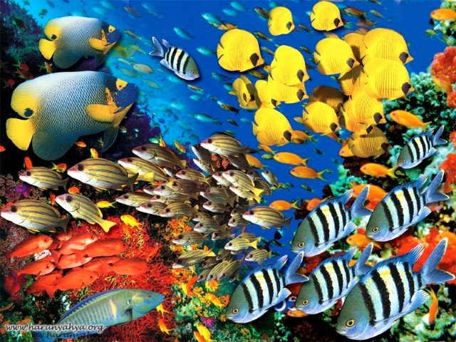 Balıklarda koku ve dokunma duyusu
