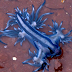 Rare blue sea dragon found washed up on beach, experts warn not to touch