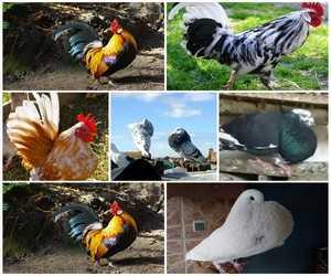 قناة المولوع هي قناة متخصصة في حمام -طيور- دجاج -قطط- كلاب  و جميع حيونات تقريب بائع من مشتري