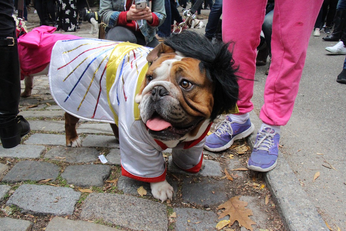 NYC Halloween Dog Parade. Li, a Scottish and NYC lifestyle blogger talks about the 26 things that she loves about NYC