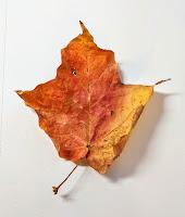 The chosen leaf!