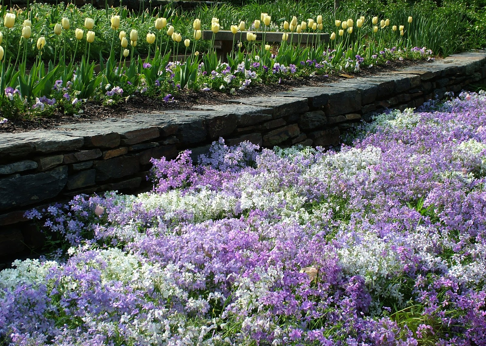Gardens Duke Spring Plant Sale Preview Woodland Phlox