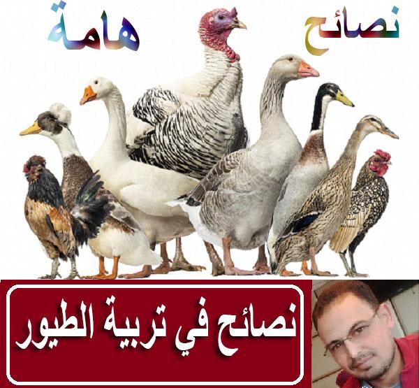 الطيور,أشياء ضرورية على المربي القيام بها بعد فقس بيض الطيور,امراض الطيور,تربية طيور البادجي في المغرب,تربية طيور البادجي للمبتدئين,تربية طيور البادجي في المنزل,طيور البادجي في الطبيعة,تربية البادجي للمبتدئين,تربية طيور البادجي الانجليزي,تربية طيور البادجي في الجزائر,كيفية تربية البادجي للمبتدئين,خلطة طبيعية تقدم لإناث الطيور بعد فقس البيض للحصول على فراخ بصحة جيدة,تربية طيور البادجي في اقفاص,طيور البادجي في القفص,طيور البادجي في البرية,تربية الكناري في المنزل,طيور البادجي الاسترالي
