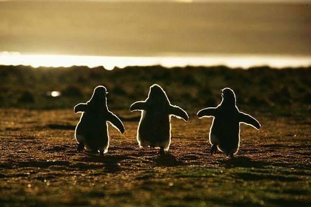 lindos%2Banimais%2Bbebe%2B%2B%252821%2529 - Os filhotes de animais mais lindinhos que você já viu!